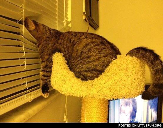 Impatient Cat Blank Template - Imgflip