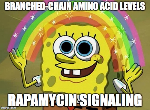 Imagination Spongebob Meme | BRANCHED-CHAIN AMINO ACID LEVELS RAPAMYCIN SIGNALING | image tagged in memes,imagination spongebob | made w/ Imgflip meme maker