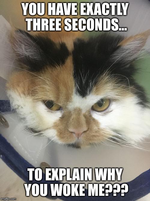 YOU HAVE EXACTLY THREE SECONDS... TO EXPLAIN WHY YOU WOKE ME??? | image tagged in angry cat | made w/ Imgflip meme maker