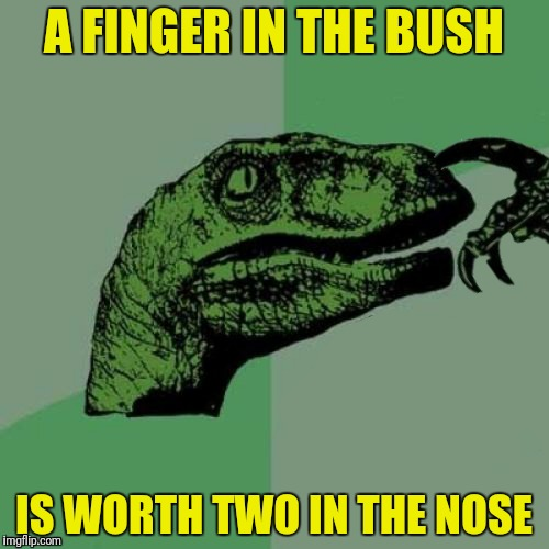 A FINGER IN THE BUSH IS WORTH TWO IN THE NOSE | made w/ Imgflip meme maker