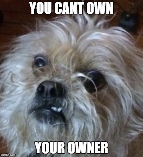 You cant own your owner | image tagged in owner | made w/ Imgflip meme maker