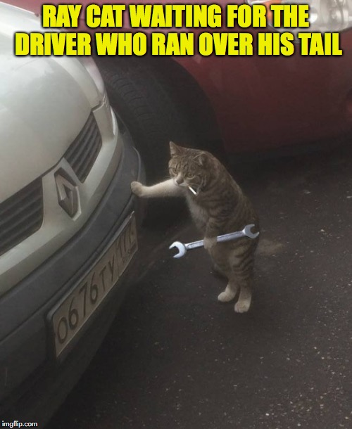 He Shudda Been More Careful | RAY CAT WAITING FOR THE DRIVER WHO RAN OVER HIS TAIL | image tagged in raycat,revenge,cat,pussy cats | made w/ Imgflip meme maker