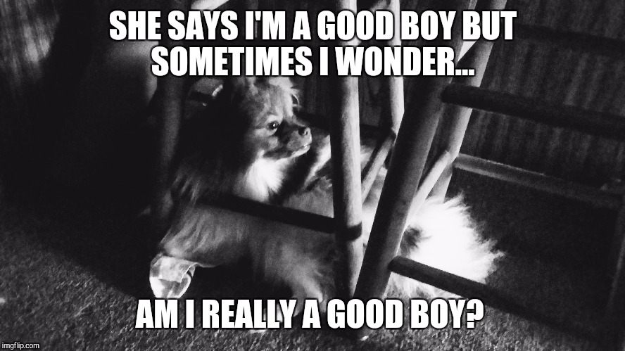 SHE SAYS I'M A GOOD BOYBUT SOMETIMES I WONDER... AM I REALLY A GOOD BOY? | image tagged in dog | made w/ Imgflip meme maker