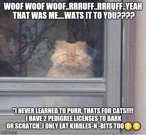 "Cats | WOOF WOOF WOOF..RRRUFF..RRRUFF..YEAH THAT WAS ME....WATS IT TO YOU???? ""I NEVER LEARNED TO PURR, THATS FOR CATS!!!! I HAVE 2 PEDIGREE LICENS 