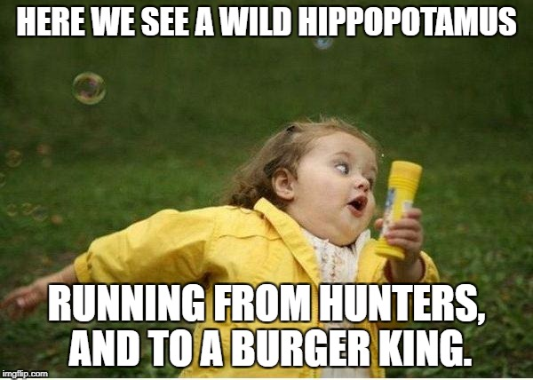 Chubby Bubbles Girl Meme | HERE WE SEE A WILD HIPPOPOTAMUS RUNNING FROM HUNTERS, AND TO A BURGER KING. | image tagged in memes,chubby bubbles girl | made w/ Imgflip meme maker