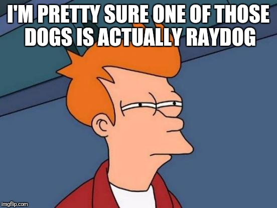 Futurama Fry Meme | I'M PRETTY SURE ONE OF THOSE DOGS IS ACTUALLY RAYDOG | image tagged in memes,futurama fry | made w/ Imgflip meme maker