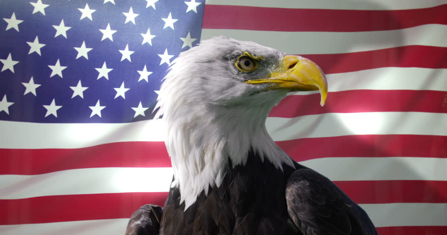 bald eagle with american flag blank template imgflip