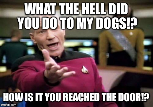 Picard Wtf Meme | WHAT THE HELL DID YOU DO TO MY DOGS!? HOW IS IT YOU REACHED THE DOOR!? | image tagged in memes,picard wtf | made w/ Imgflip meme maker