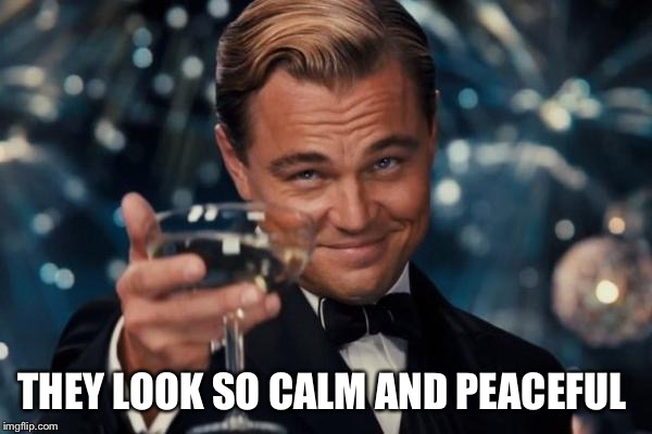 Leonardo Dicaprio Cheers Meme | THEY LOOK SO CALM AND PEACEFUL | image tagged in memes,leonardo dicaprio cheers | made w/ Imgflip meme maker