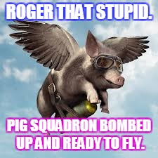 ROGER THAT STUPID. PIG SQUADRON BOMBED UP AND READY TO FLY. | image tagged in pigs might fly | made w/ Imgflip meme maker
