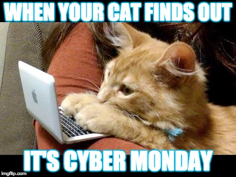 Cats and Cyber monday | WHEN YOUR CAT FINDS OUT IT'S CYBER MONDAY | image tagged in cats,funny cats | made w/ Imgflip meme maker