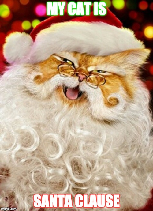 Cat Clause | MY CAT IS SANTA CLAUSE | image tagged in cats,funny cats,santa claus,santa,christmas | made w/ Imgflip meme maker