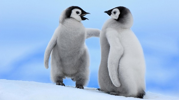 baby penguin telling off another baby penguin template