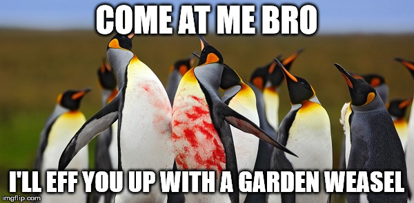 Penguin Bloodshed | COME AT ME BRO I'LL EFF YOU UP WITH A GARDEN WEASEL | image tagged in penguin bloodshed | made w/ Imgflip meme maker