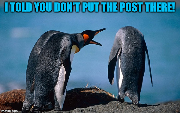 Penguin Yelling At Another Penguin | I TOLD YOU DON'T PUT THE POST THERE! | image tagged in penguin yelling at another penguin | made w/ Imgflip meme maker