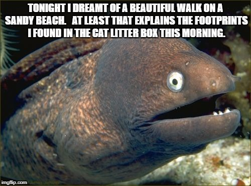up-vote if you dream like this | TONIGHT I DREAMT OF A BEAUTIFUL WALK ON A SANDY BEACH.   AT LEAST THAT EXPLAINS THE FOOTPRINTS I FOUND IN THE CAT LITTER BOX THIS MORNING. | image tagged in memes,bad joke eel | made w/ Imgflip meme maker
