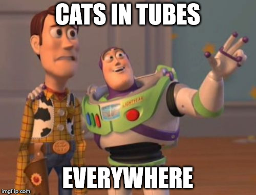 X, X Everywhere Meme | CATS IN TUBES EVERYWHERE | image tagged in memes,x,x everywhere,x x everywhere | made w/ Imgflip meme maker