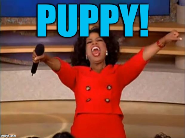 Oprah You Get A Meme | PUPPY! | image tagged in memes,oprah you get a | made w/ Imgflip meme maker
