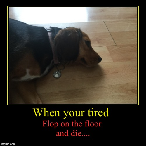 When your tired | Flop on the floor and die.... | image tagged in funny,demotivationals | made w/ Imgflip demotivational maker
