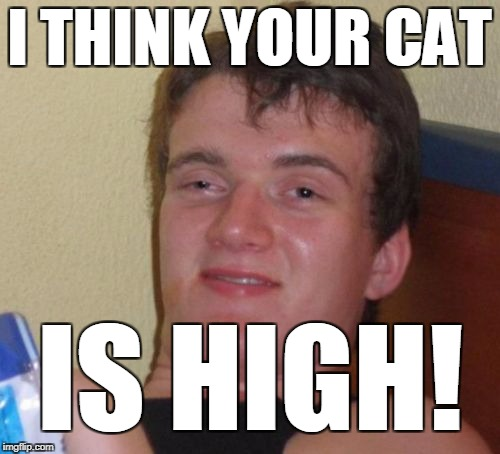 10 Guy Meme | I THINK YOUR CAT IS HIGH! | image tagged in memes,10 guy | made w/ Imgflip meme maker