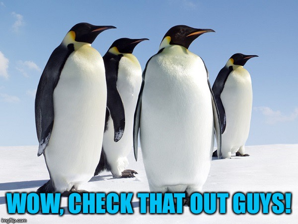 Group of Penguins | WOW, CHECK THAT OUT GUYS! | image tagged in group of penguins | made w/ Imgflip meme maker