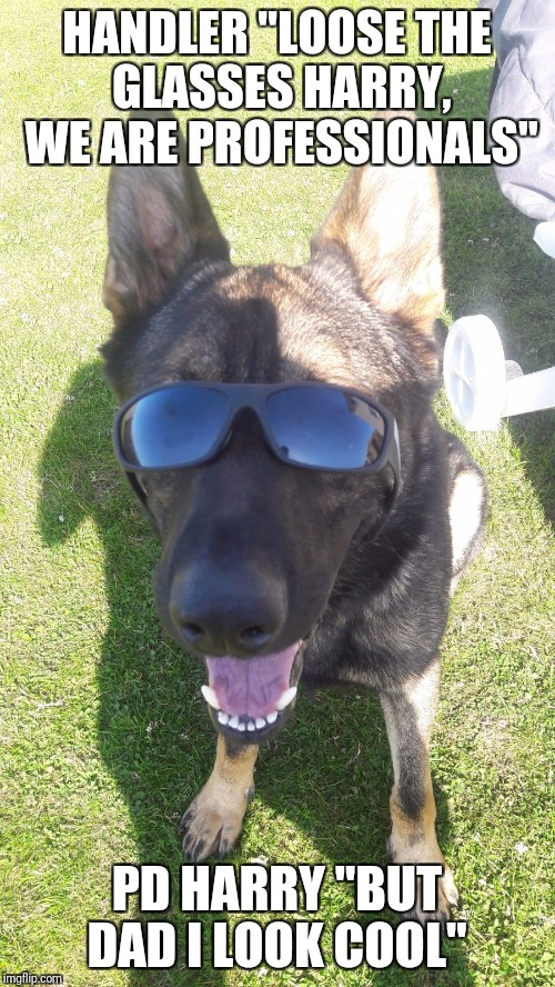 "Cool police dog | HANDLER ""LOOSE THE GLASSES HARRY, WE ARE PROFESSIONALS"" PD HARRY ""BUT DAD I LOOK COOL"" 