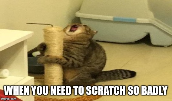 WHEN YOU NEED TO SCRATCH SO BADLY | made w/ Imgflip meme maker