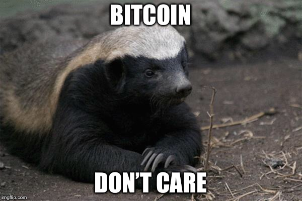 Honey badger | BITCOIN DON'T CARE | image tagged in honey badger | made w/ Imgflip meme maker