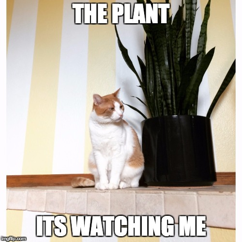 THE PLANT ITS WATCHING ME | image tagged in danielle yuthas cat meme | made w/ Imgflip meme maker