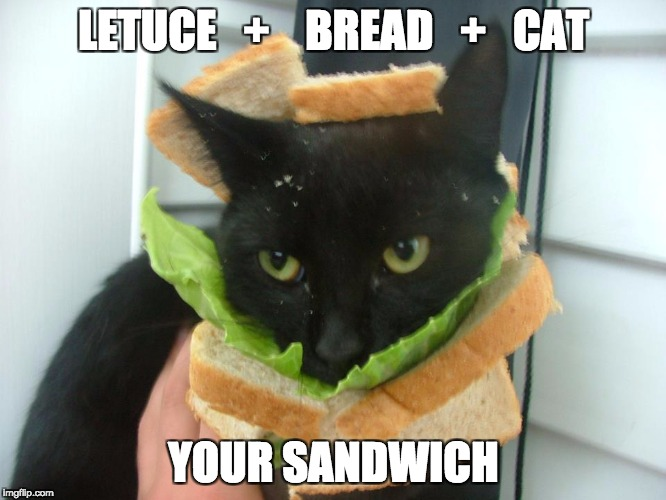 LETUCE   +    BREAD   +   CAT YOUR SANDWICH | image tagged in sandwich cat | made w/ Imgflip meme maker