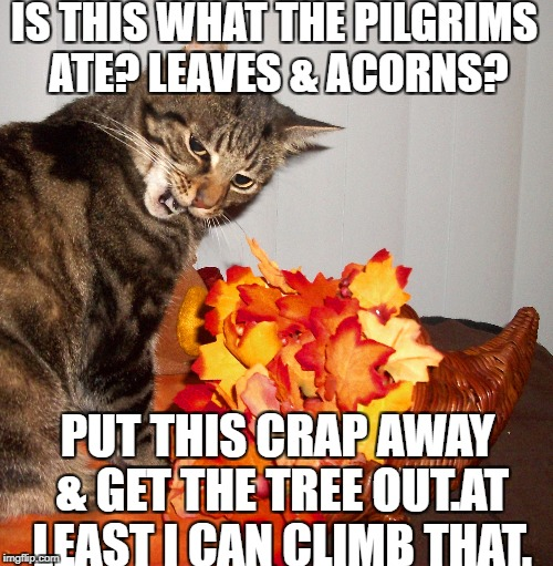 Bossy Cat | IS THIS WHAT THE PILGRIMS ATE? LEAVES & ACORNS? PUT THIS CRAP AWAY & GET THE TREE OUT.AT LEAST I CAN CLIMB THAT. | image tagged in meme,cat,holidays | made w/ Imgflip meme maker