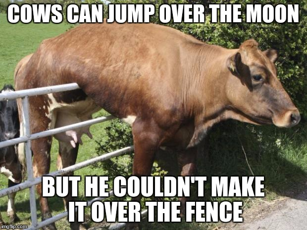 COWS CAN JUMP OVER THE MOON BUT HE COULDN'T MAKE IT OVER THE FENCE | image tagged in cow | made w/ Imgflip meme maker