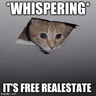 Ceiling Cat | *WHISPERING* IT'S FREE REALESTATE | image tagged in memes,ceiling cat | made w/ Imgflip meme maker