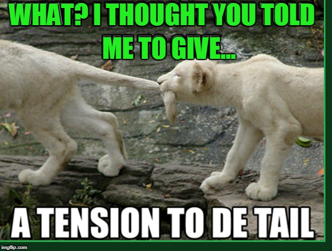 You Musta Been Lion | WHAT? I THOUGHT YOU TOLD ME TO GIVE... | image tagged in vince vance,lion cubs,lion cub biting sibling's tail,animal memes,bad pun | made w/ Imgflip meme maker