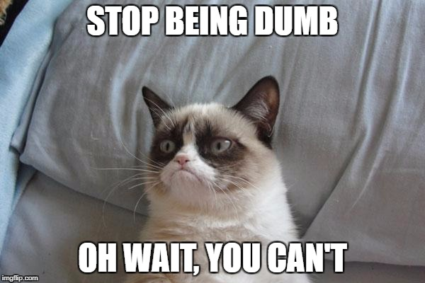 Grumpy Cat Bed | STOP BEING DUMB OH WAIT, YOU CAN'T | image tagged in memes,grumpy cat bed,grumpy cat | made w/ Imgflip meme maker