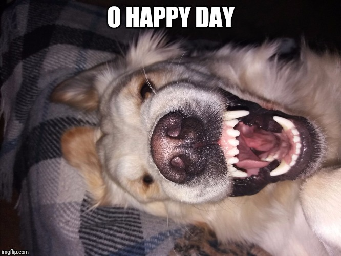 O HAPPY DAY | image tagged in zedas happy face | made w/ Imgflip meme maker