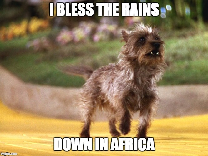 Toto Africa | I BLESS THE RAINS DOWN IN AFRICA | image tagged in toto africa,africa,rains,bless the rains | made w/ Imgflip meme maker