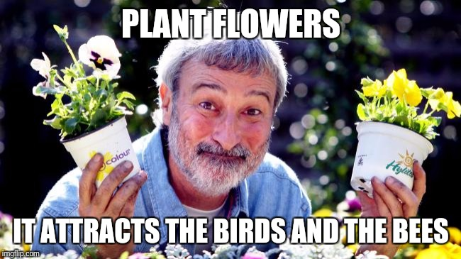 PLANT FLOWERS IT ATTRACTS THE BIRDS AND THE BEES | image tagged in don burke | made w/ Imgflip meme maker