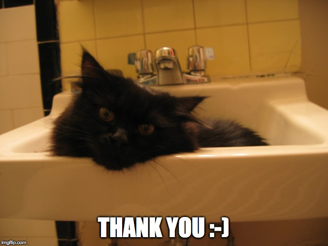 sink kitty 2 | THANK YOU :-) | image tagged in sink kitty 2 | made w/ Imgflip meme maker
