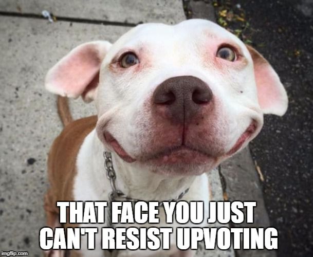 Overly Happy Pitbull | THAT FACE YOU JUST CAN'T RESIST UPVOTING | image tagged in overly happy pitbull | made w/ Imgflip meme maker