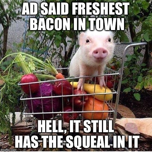 baby pig please do not eat bacon | AD SAID FRESHEST BACON IN TOWN HELL, IT STILL HAS THE SQUEAL IN IT | image tagged in baby pig please do not eat bacon | made w/ Imgflip meme maker