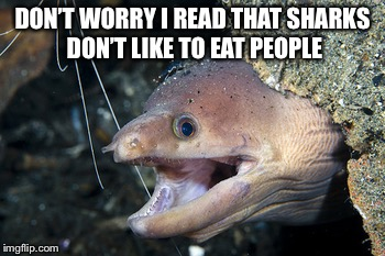 Happy Eel | DON'T WORRY I READ THAT SHARKS DON'T LIKE TO EAT PEOPLE | image tagged in happy eel | made w/ Imgflip meme maker