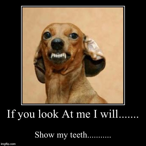 If you look At me I will....... | Show my teeth........... | image tagged in funny,demotivationals | made w/ Imgflip demotivational maker
