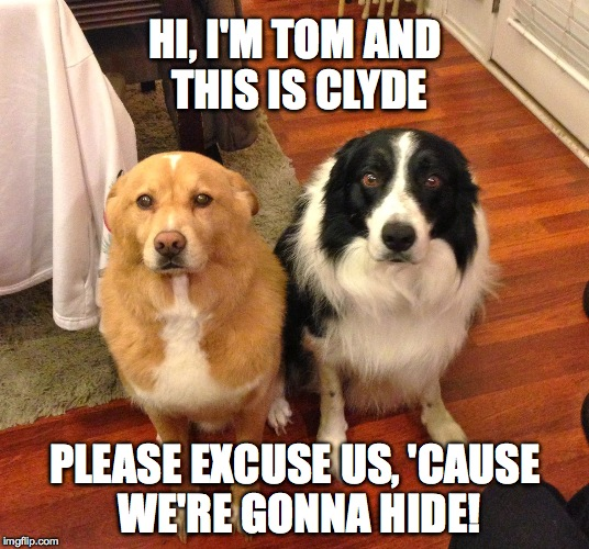 besties | HI, I'M TOM AND THIS IS CLYDE PLEASE EXCUSE US, 'CAUSE WE'RE GONNA HIDE! | image tagged in besties | made w/ Imgflip meme maker
