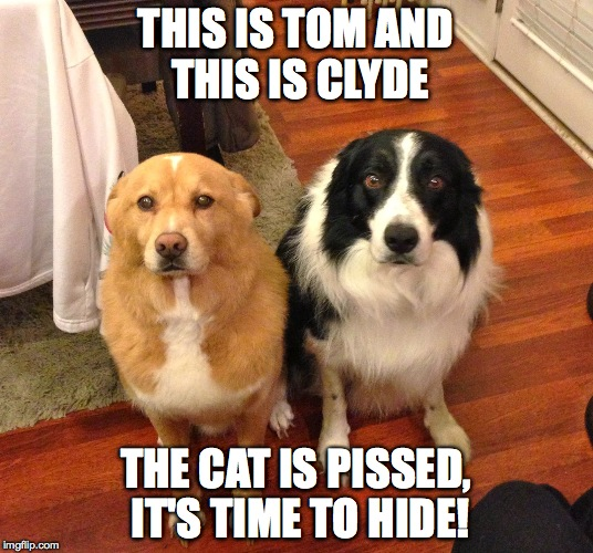 Doggos in Deep Doo Doo | THIS IS TOM AND THIS IS CLYDE THE CAT IS PISSED, IT'S TIME TO HIDE! | image tagged in besties | made w/ Imgflip meme maker