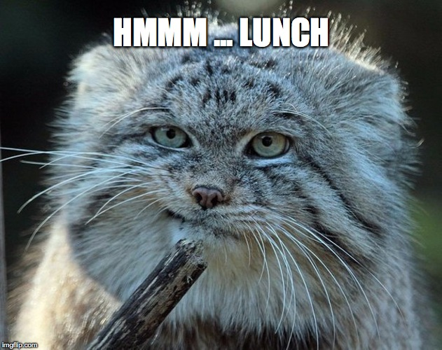 HMMM ... LUNCH | made w/ Imgflip meme maker