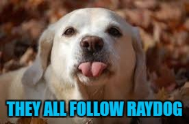 THEY ALL FOLLOW RAYDOG | made w/ Imgflip meme maker