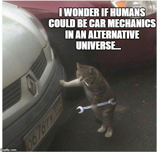 I WONDER IF HUMANS COULD BE CAR MECHANICS IN AN ALTERNATIVE UNIVERSE... | image tagged in business cat | made w/ Imgflip meme maker