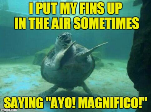 "I PUT MY FINS UP IN THE AIR SOMETIMES SAYING ""AYO! MAGNIFICO!"" 