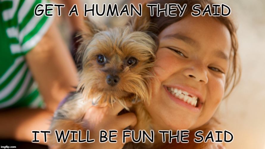 GET A HUMAN THEY SAID IT WILL BE FUN THE SAID | image tagged in dog abuse,human | made w/ Imgflip meme maker